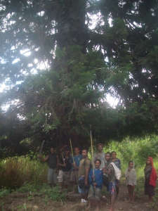 Danny and some boys standing under a huge pine tree. The vegetation up there was alpine mixed with jungle - incredibly unique.